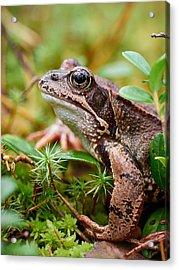 Portrait Of A Frog Acrylic Print by Jouko Lehto