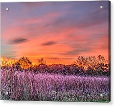 Illinois Prairie Moments Before Sunrise Acrylic Print