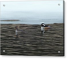 Acrylic Print featuring the photograph Pretty Ducks by Gene Cyr