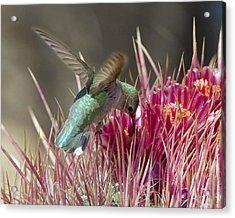 Prickly Delicacy Acrylic Print