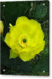 Acrylic Print featuring the photograph Prickly Pear Cactus by William Tanneberger