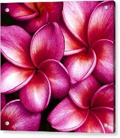 Pua Melia Acrylic Print