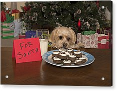 Puppy Checking Out Christmas Cookies Acrylic Print