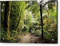 Pureora Forest Acrylic Print by Les Cunliffe