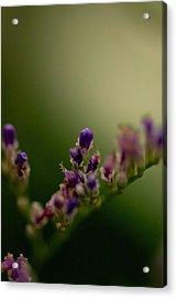 Purple Bud Acrylic Print by Kevin Bone