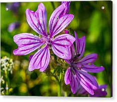 Acrylic Print featuring the photograph Purple Flower. by Gary Gillette
