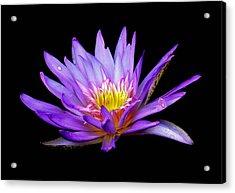 Purple Lilly Acrylic Print