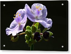 Purple Acrylic Print by Monika A Leon