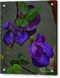 Purple Pleasure Acrylic Print