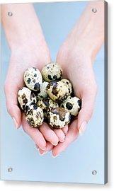 Quail Eggs Acrylic Print by Ian Hooton/science Photo Library