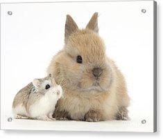 Rabbit And Roborovski Hamster Acrylic Print