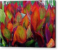 Rainbow Leaves Acrylic Print by Rita Mueller