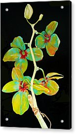 Rainbow Orchids Acrylic Print by Jean Cormier