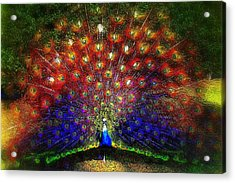 Acrylic Print featuring the photograph Rainbow Peacock by Jodie Marie Anne Richardson Traugott          aka jm-ART