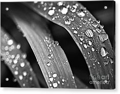 Raindrops On Grass Blades Acrylic Print