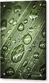 Raindrops On Green Leaf Acrylic Print by Elena Elisseeva