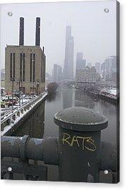 Rats Acrylic Print