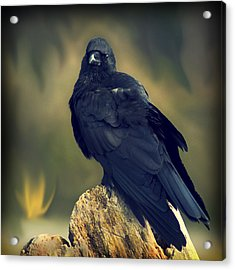 Acrylic Print featuring the photograph Raven by Yulia Kazansky