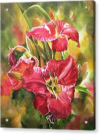Red Daylilies Acrylic Print by Alfred Ng