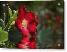 Red Flowers Acrylic Print by Aged Pixel