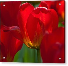 Red Acrylic Print by Randolph Fritz
