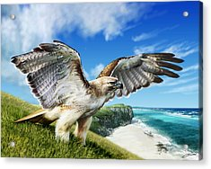 Red-tailed Hawk Acrylic Print by Owen Bell