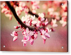Acrylic Print featuring the photograph Redbud Blossoms by Trina  Ansel