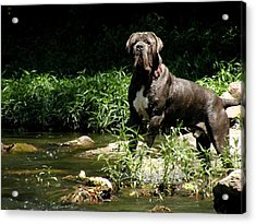 Acrylic Print featuring the photograph River King by Carlee Ojeda