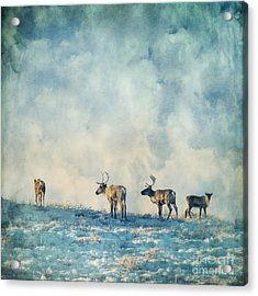 Roam Free Acrylic Print