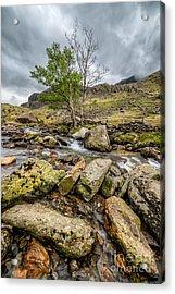 Rocky Stream Acrylic Print by Adrian Evans
