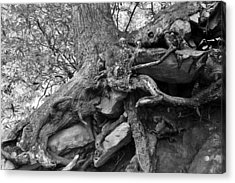 Roots Of Life Acrylic Print by David Lee Thompson