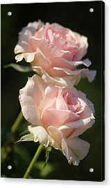 Rosa 'johann Strauss' Flowers Acrylic Print by Maria Mosolova