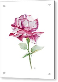Rose 2 Acrylic Print by Nancy Edwards