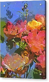 Rose 208 Acrylic Print by Pamela Cooper