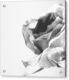 Rose I Acrylic Print