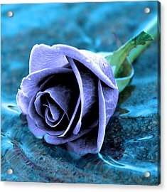 Rose In Water  Acrylic Print