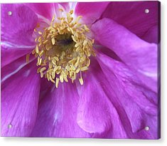 Acrylic Print featuring the photograph Rose Pink by Gene Cyr