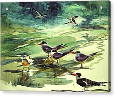 Royal Terns And Black Skimmers Acrylic Print