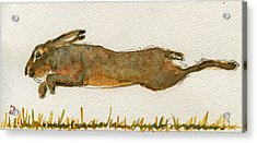Running Hare Acrylic Print