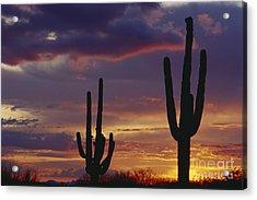 Saguaro Cactus At Dusk Acrylic Print by Jim Corwin