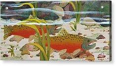Salmon Acrylic Print by Katherine Young-Beck