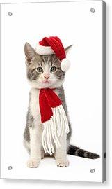 Santa Cat Acrylic Print by Greg Cuddiford