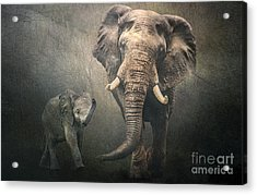 Acrylic Print featuring the photograph Save The Elephants by Brian Tarr
