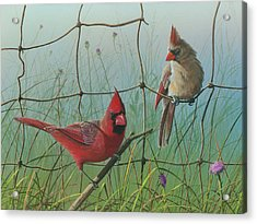 Acrylic Print featuring the painting Scarlet by Mike Brown
