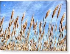 Sea Breeze Acrylic Print by Kelvin Booker