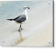 Sea Gull Acrylic Print by Shelly Grobstig