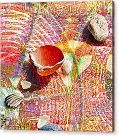Sea Shells In A Row Acrylic Print