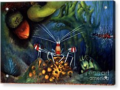 Sea Shrimp Acrylic Print