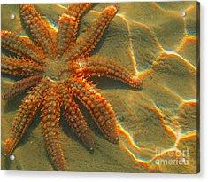 Sea Star Acrylic Print