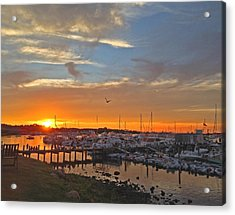 Seagull Sunset Acrylic Print by Todd Breitling